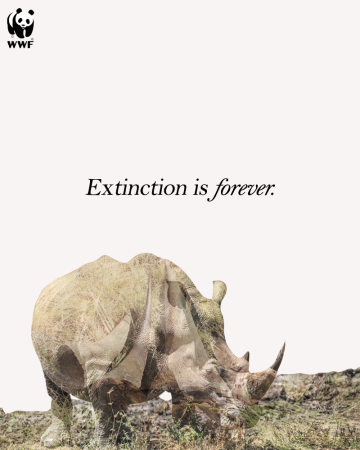 DE-Rhino